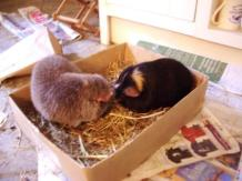 Midge and Hector make friends in the hay-in-a-box