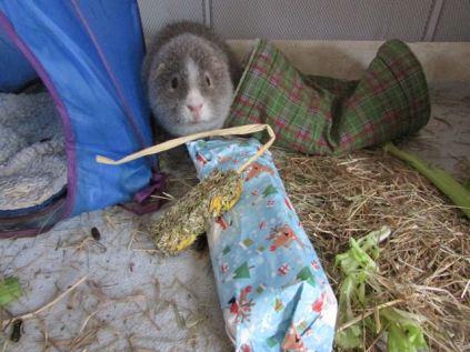 Midge and his treat stick