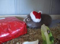Midge tries out his present wrapping