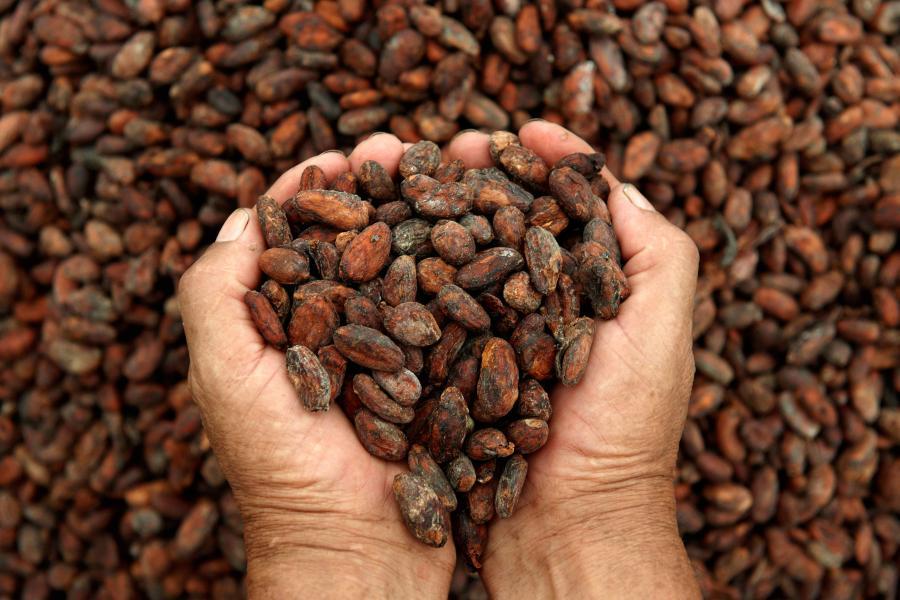 Interpellations lors de la manifestation des producteurs de cacao — Côte d'Ivoire