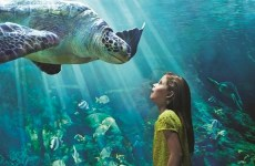 Video: SeaWorld to open in Abu Dhabi's Yas Island