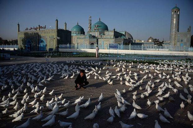 An Afghan boy feeds pigeons at the Hazrat-i- Ali shrine in Mazar-i Sharif ahead of Eid prayers.