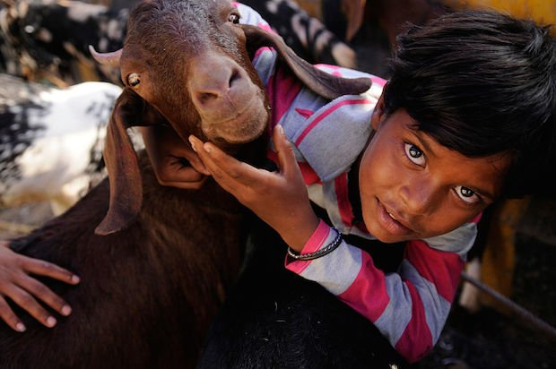 A boy plays with a sacrificial goat at a livestock market ahead of the Eid al-Adha celebrations in Noida, India.