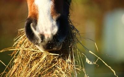 Choosing Hay