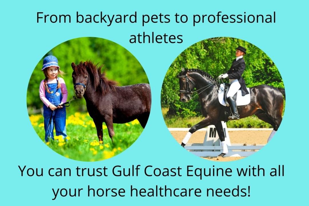sport horse lameness vet Sarasota