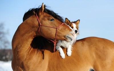 Equine Insurance