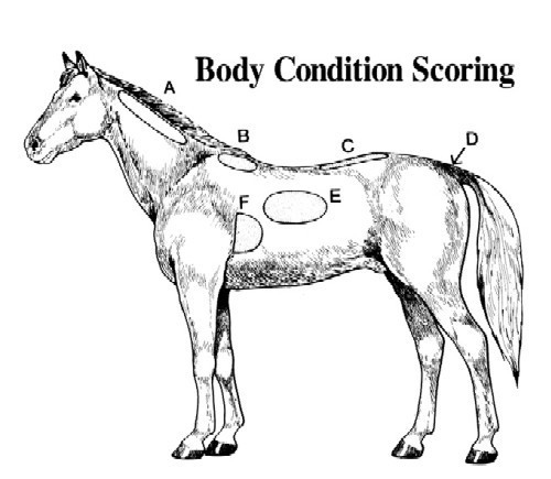 Gulf Coast Equine