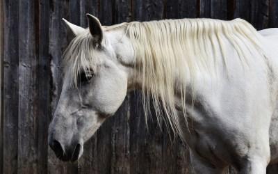Caring for Older Horses