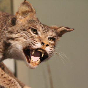 50 Dangerous Gulf Coast Animals