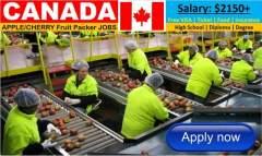 Fruit & Food Packaging Job in Canada