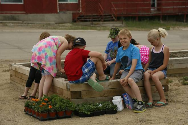 Grade 3 Class Plants Flowers at the Downtown Xeroscape Garden GULL LAKE Town Beautification  Communities in Bloom