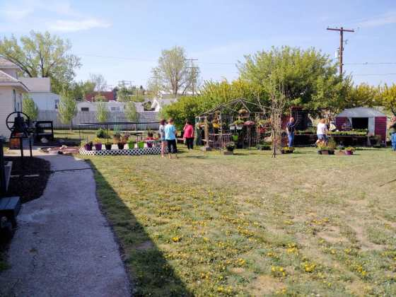 ANNUAL BEDDING PLANTS SALE AT THE GULL LAKE MUSEUM
