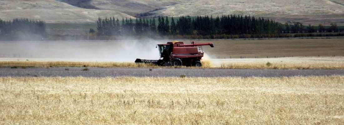 Wheat trade hoping for big export year Agriculture  Crops Canada