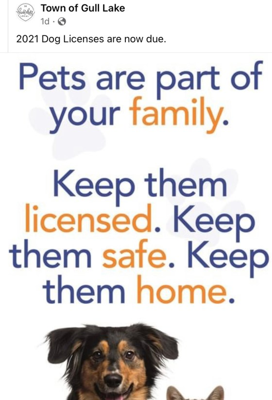 Dog Licenses Are now Due Education  Town Council