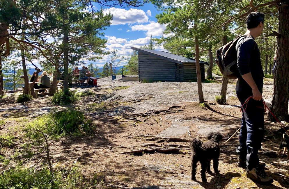 Hundvänligt utflyktsmål Gullvik Höga Kusten Ögeltjärnsberget