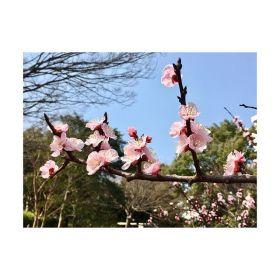 【春でぇむん】暖かくて気持ちいいね〜︎———#春 #さくら#spring #flower #pink#ฤดูใบไม้ผลิ #青葉台マッサージ #田園都市線 #青葉台#駅近サロン#リラクゼーションサロン #gumi#タイ古式マッサージ#タイ式リフレクソロジー #タイ古式 × #アロマ#リラックス #リフレッシュ#こだわり #空間 #interior#simple #design #asian #thai#癒し #パグ #dog #pug