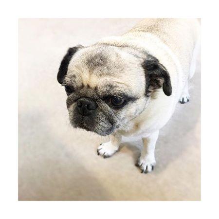 【抱っこまち〜】#抱っこ 待ってる #フォーン#癒し #パグ #黒パグ #鼻ぺちゃ#老犬 #dog #pug #犬#かわいい #ほのぼの#青葉台マッサージ #田園都市線 #青葉台#駅近サロン#リラクゼーションサロン #gumi#タイ古式マッサージ#タイ式リフレクソロジー #リラックス #リフレッシュ#こだわり #空間 #interior#simple #design