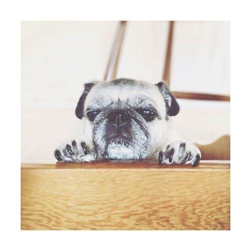 【まだねむい】 いってらっしゃい。ねぇちゃん今日も仕事頑張るね!---------#goodmorning#フォーン #癒し #パグ #黒パグ #鼻ぺちゃ#老犬 #dog #pug#かわいい #だいすき #青葉台マッサージ #田園都市線 #青葉台#駅近サロン#リラクゼーションサロン #gumi#タイ古式マッサージ#タイ式リフレクソロジー #リラックス #リフレッシュ#こだわり #空間 #interior#simple #design