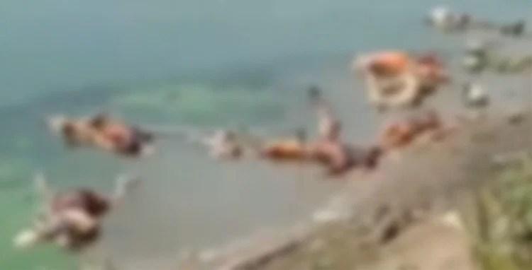 बिहारः बक्सर में गंगा घाट पर बहकर आए 40 शव, प्रशासन ने यूपी से आने का किया  दावा