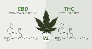 CBD vs THC does CBD get you high
