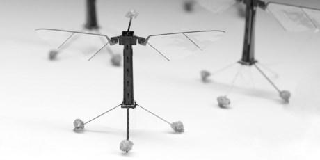 robot-bee