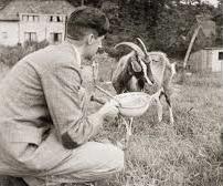 Orwell feeding his goat