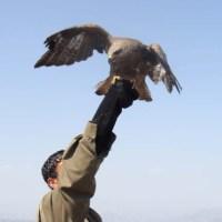HPG: Şemdinli'de 28 Asker Öldü, 2 Gerilla Kaybı Var