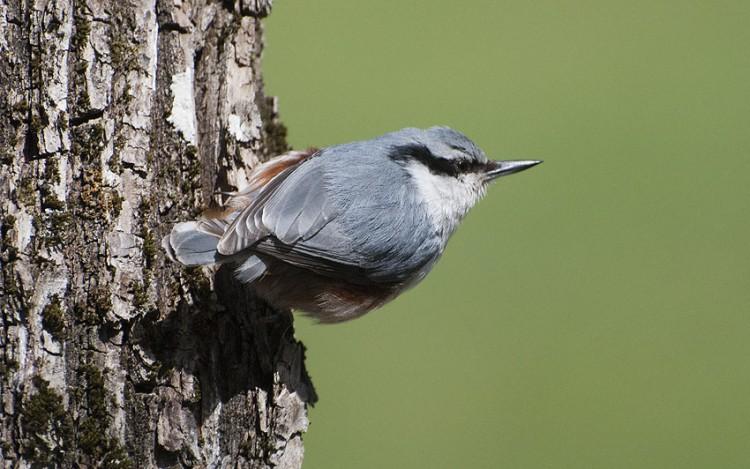 Lördag med finväder och fåglar #blogg100