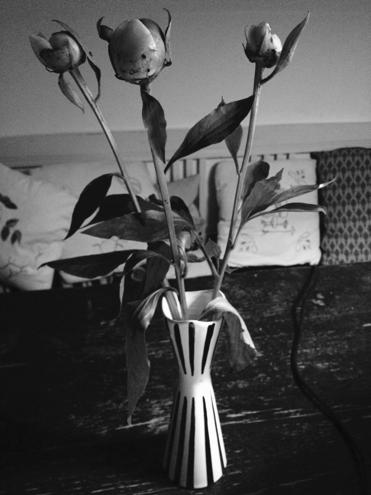 Svart och vitt och svartvitt #Blogg100 78