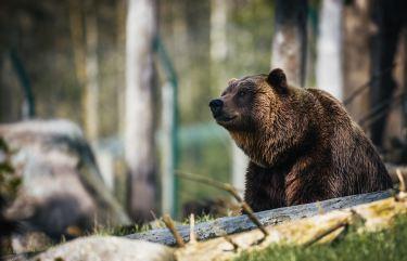 釣りと登山好きは抑えた方が良い熊対策について考えた