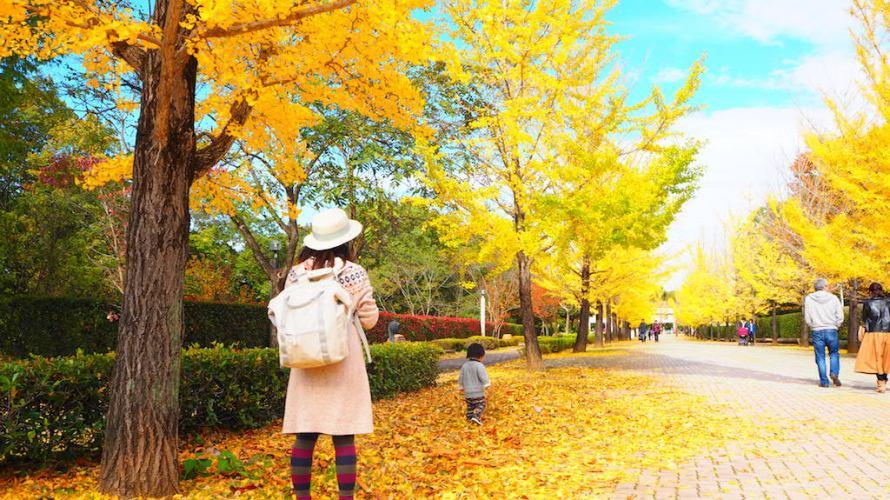 秩父ミューズパークで見られる色鮮やかなイチョウ並木!【埼玉】おすすめスポット
