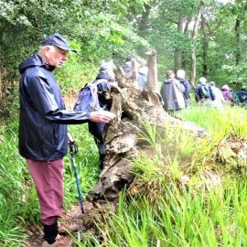DISCOVERY TRAIL, LOPWELL DAM and the MARISTOW ESTATE Walk and Talk