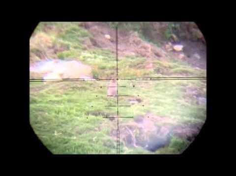 70 yard Kalibrgun Rabbit Scope Cam