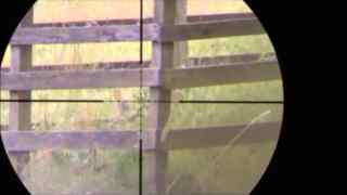 Air rifle hunting long range with the sub 12ftlbs BSA Scorpion T10