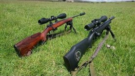 CZ 452 22lr and CZ 527 22 Hornet Precision Pest Control