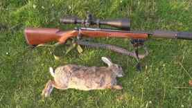 CZ 527 .17 Hornet 352 yard bunny shot with bullet trace!