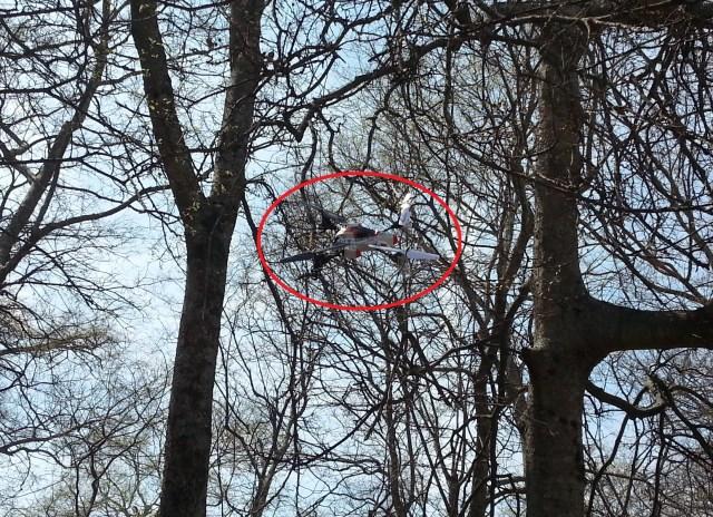 smya x1 in a tree