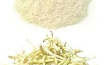 safed musli for males in hindi