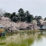 2020 大宮公園 お花見 見聞録