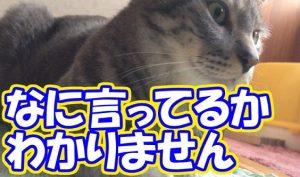 何言っているかわかりません猫