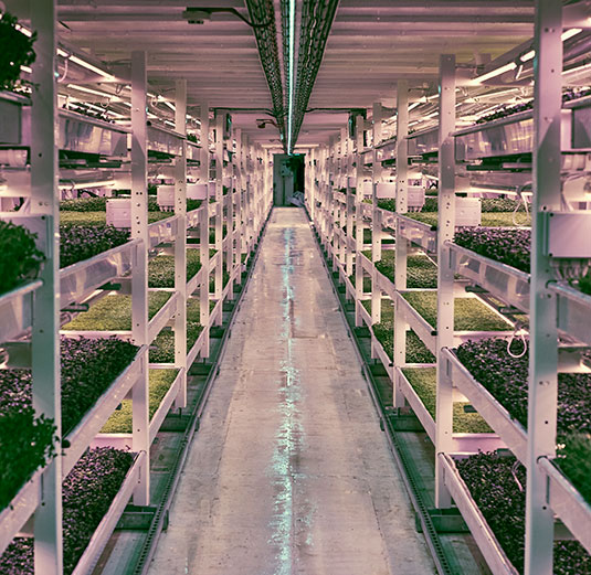 First underground urban farm opens in London