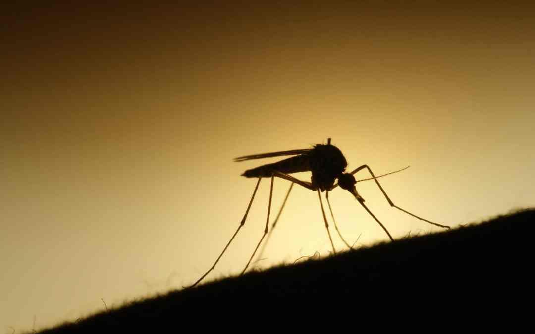 Mosquito by Erik F. Brandsborg