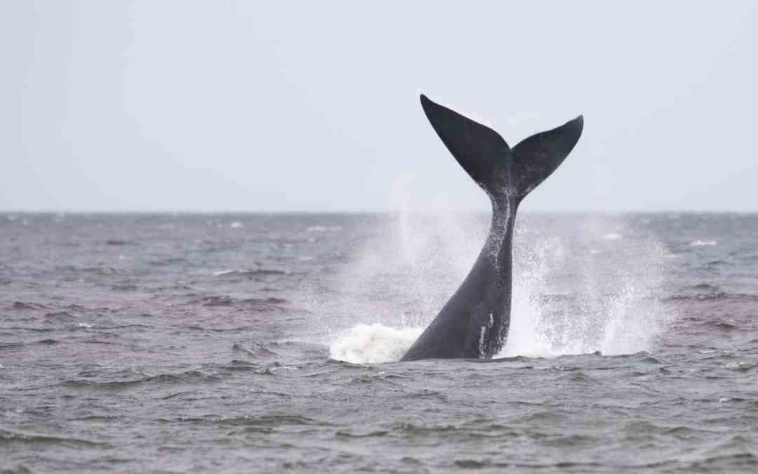 Whale watching in Uruguay - Remco Douma