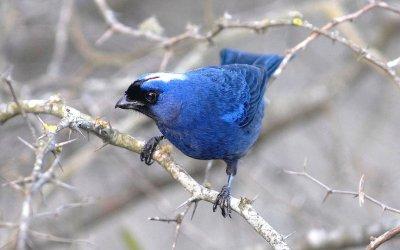 Uruguai: oásis de observação de pássaros na América do Sul