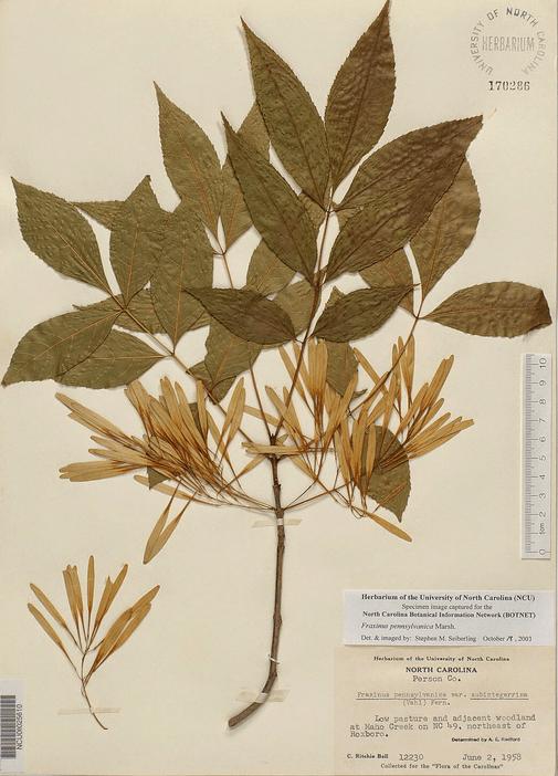 herbarium kering
