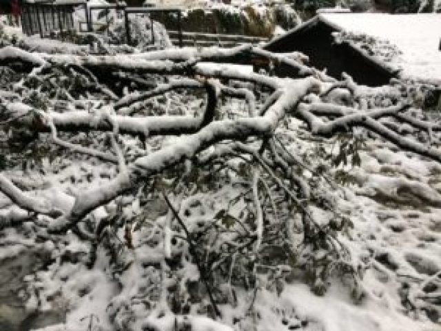 shimla-trip-snowfall