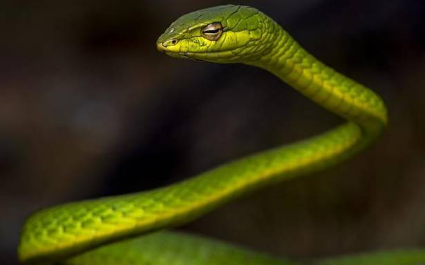 Four home-grown apps on Kerala's snakes from Kerala