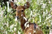 Tracking the tigress at Panna National Park
