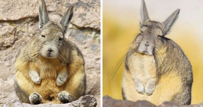 This Very Un-Entertained And Sleepy Creature From South America Is Everyone's New Spirit Animal