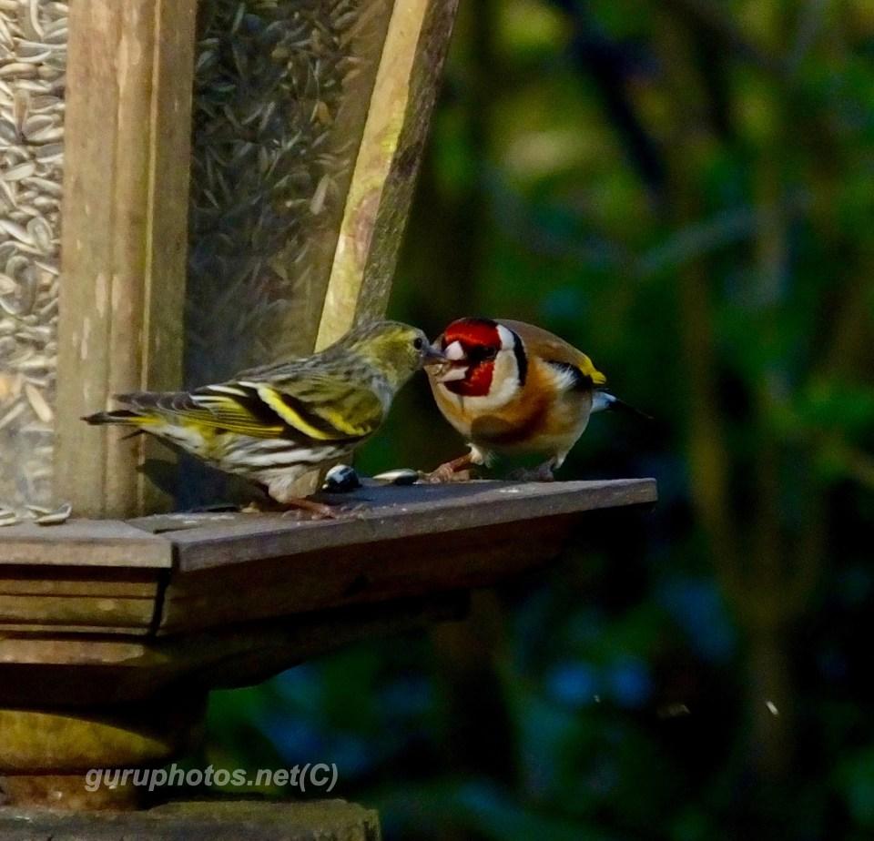 birds watermarkS0424831